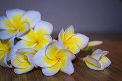 White tropical flowers plumeria on a dark background. A bouquet of white tropical flowers plumeria on a dark background Stock Photos