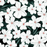 White tropical flowers seamless pattern Stock Photography