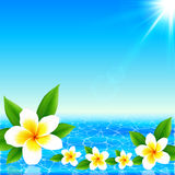 White tropical flowers on shining ocean background Royalty Free Stock Photos