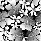 White tropical hibiscus flower with frangipani seamless pattern Stock Photo