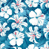 White tropical hibiscus flowers. royalty free illustration