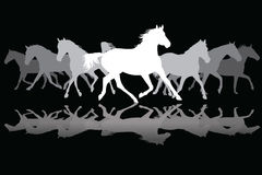 White Trotting horses silhouette on black background Royalty Free Stock Image