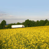 White truck behind a bright rape field Stock Image
