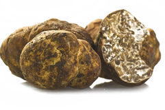 White truffle Royalty Free Stock Image