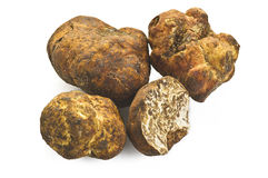 White truffle Royalty Free Stock Photography