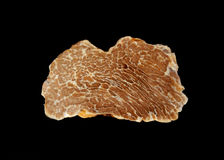 White truffle's texture Royalty Free Stock Image