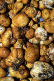 The white truffle Royalty Free Stock Images