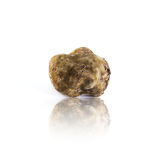 White truffle tuber magnatum pico from Alba, italy Stock Photos