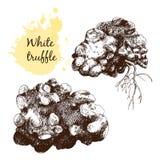 White truffles group isolated on white Stock Photos