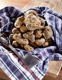 White truffles on a napkin Stock Photography