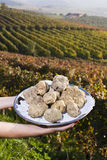 White truffles from Piedmont on the tray in the background hills Stock Photo