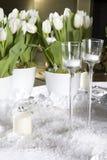 White tulip. Stock Photo