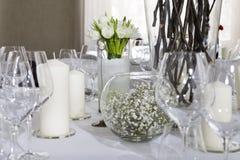 White tulip. Stock Image