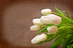 White tulip bouquet  isolated . Royalty Free Stock Photo