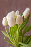 White tulip bouquet  isolated . Stock Images