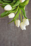 White tulip bouquet  isolated . Royalty Free Stock Images