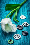 White tulip and buttons Royalty Free Stock Photography