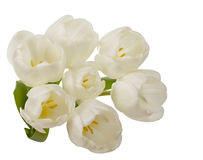 White tulip flowers bouquet Stock Photography