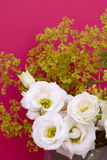 White tulip gentians and alchemilla mollis on pink Royalty Free Stock Photos