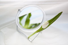 White tulip and mirror. One white tulip in a round mirror Stock Images