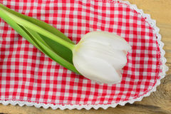 White tulip on a red white checkered doily Stock Photography