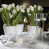 White tulip. Romantic party Royalty Free Stock Image