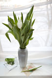 White tulips. Bouquet of white tulips in the vase Royalty Free Stock Photos