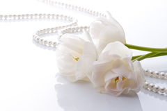 White tulips. And pearls on white background Stock Photo