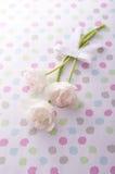 White tulips. White tulip bouquet on pop background Stock Image