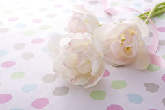 White tulips. White tulip bouquet and pink ribbon on pop background Royalty Free Stock Photography