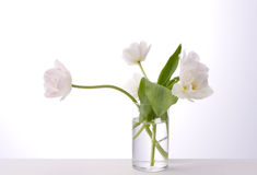 White tulips. In glass bottle Stock Photography