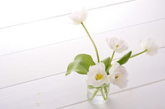 White tulips Stock Images
