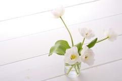 White tulips. White tulip in glass on white floor Stock Images