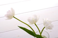 White tulips. In glass bottle on white floor Royalty Free Stock Images