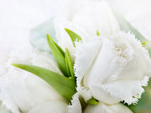 White tulips Stock Image