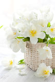 White tulips in a basket Stock Photo