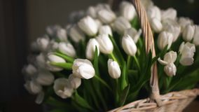 White tulips in a basket. Basket appears from the defocus. The camera goes on rails stock video footage