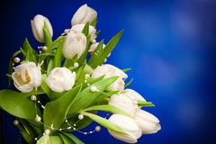 White tulips with beads Royalty Free Stock Images