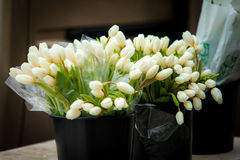White tulips. Beautiful close up flowers at daylight Stock Photography