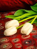 White Tulips on a bed Royalty Free Stock Images