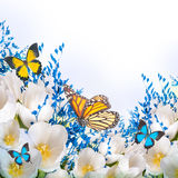 White tulips with blue grass and  butterfly Royalty Free Stock Photography