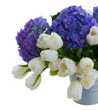White tulips and blue hortensia flowers close up Royalty Free Stock Photography