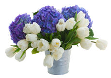 White tulips and blue hortensia flowers Stock Photography