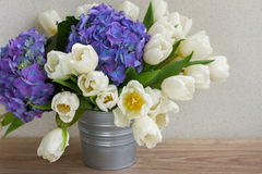 White tulips and blue hortensia flowers Royalty Free Stock Images