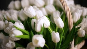 White tulips, bouquet in basket close-up. Beautiful backlighting stock footage
