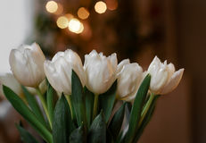 White tulips. Bouquet of white tulips, green leaves Royalty Free Stock Images