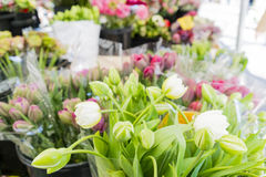 White tulips and bunches of colored flowers in a market royalty free stock images