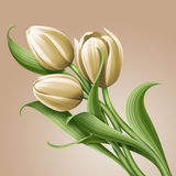 White tulips floral illustration, flowers arrangement Stock Photography