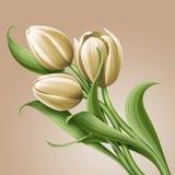 White tulips floral illustration, flowers arrangement Stock Photography