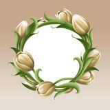 White tulips floral illustration, flowers arrangement Stock Photos
